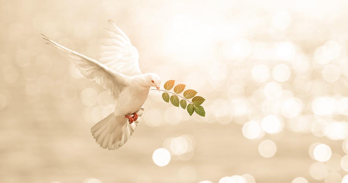 Barış Nedir İslam Dininin Nihai Hedefi Barış