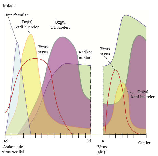 Aşılama İle Bağışıklama Grafiği