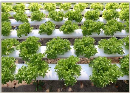 Topraksız tarım uygulamaları